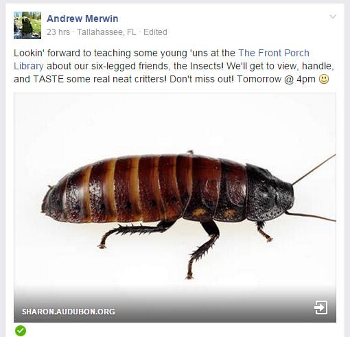 bug meal