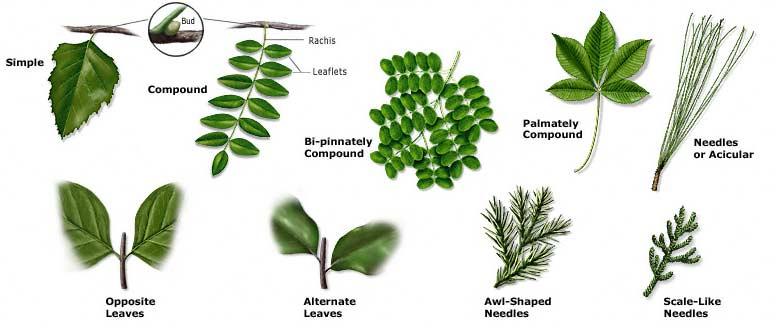 leaf_arr